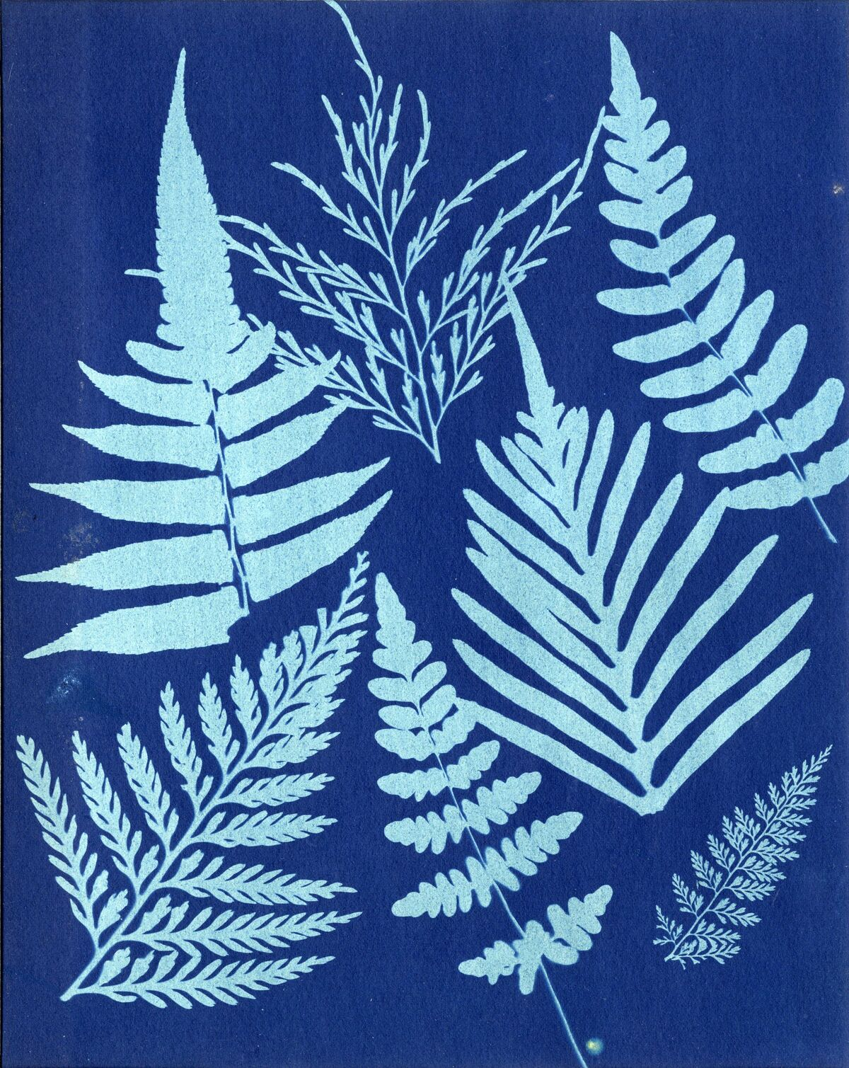 Anonymous, Ferns, 1850s. Courtesy of The Barnes Foundation, Michael Mattis and Judy Hochberg.