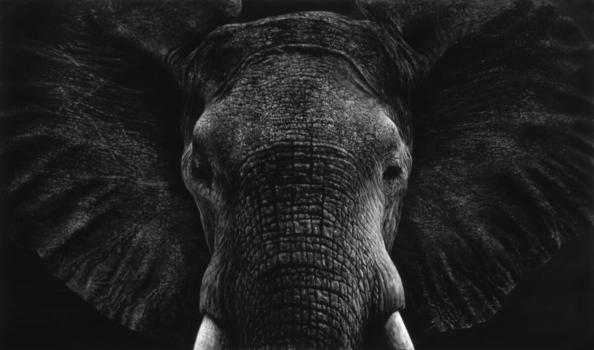 Robert Longo, Untitled (First Elephant), 2019. © Robert Longo / ARS New York, 201.9.