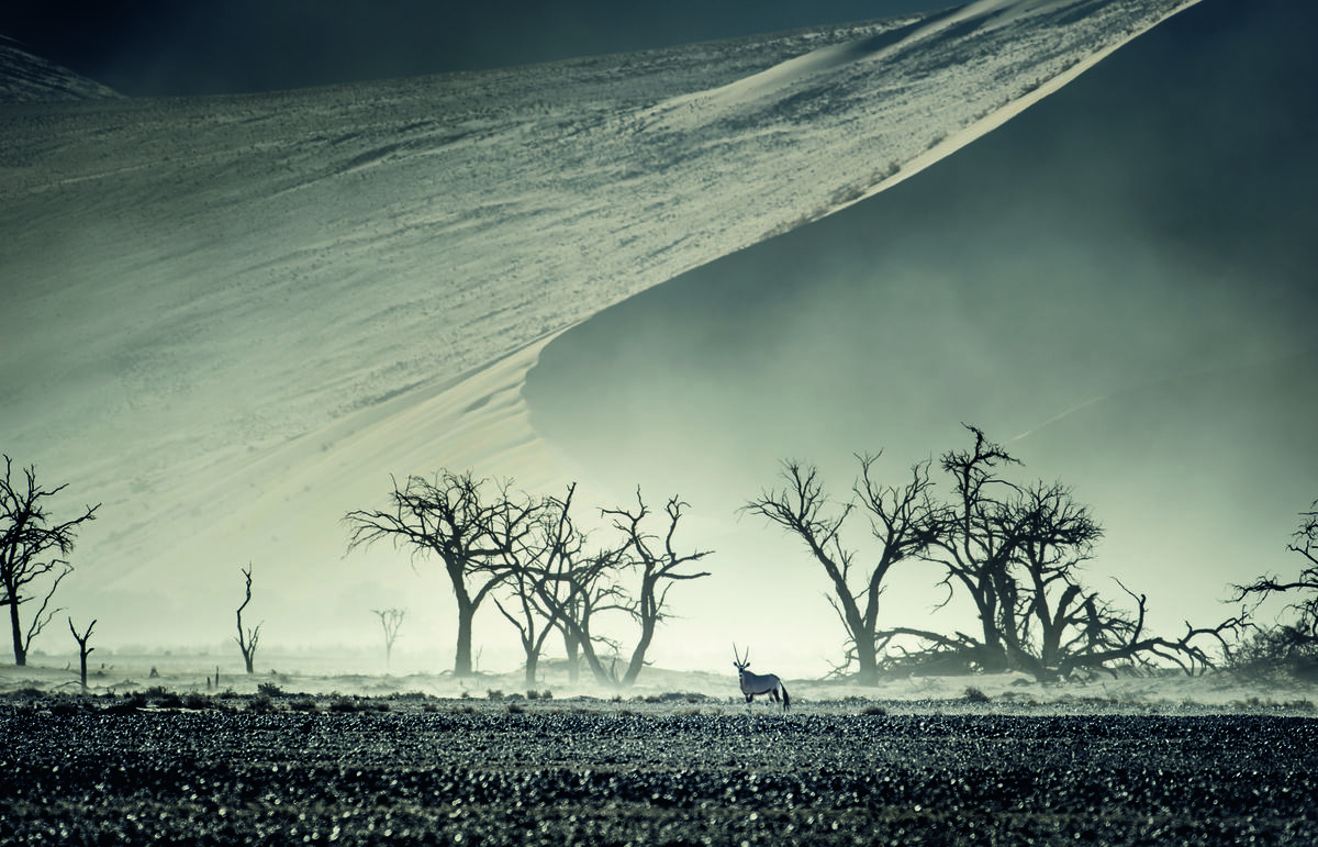 Oryx in dust storm with dead trees, Sossusvlei, Namib Naukluft National Park, Namib Desert, Namibia. © Peter & Beverly Pickford, from Wild Land by Peter & Beverly Pickford.