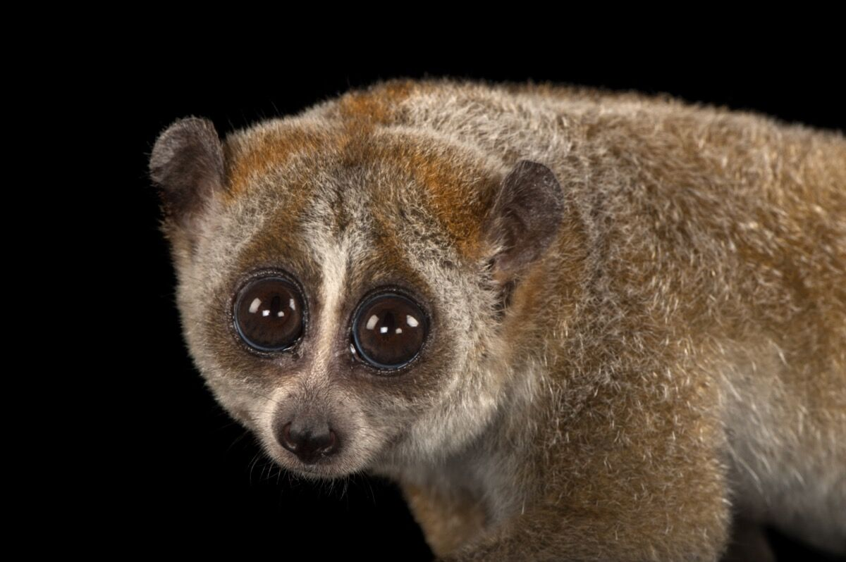 Joel Sartore's Mission to Document Animal Species before