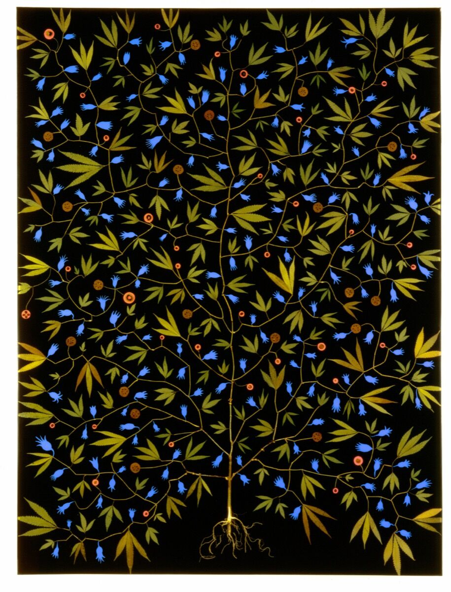 Fred Tomaselli, Super Plant, 1994. © Fred Tomaselli. Courtesy of James Cohan, New York.