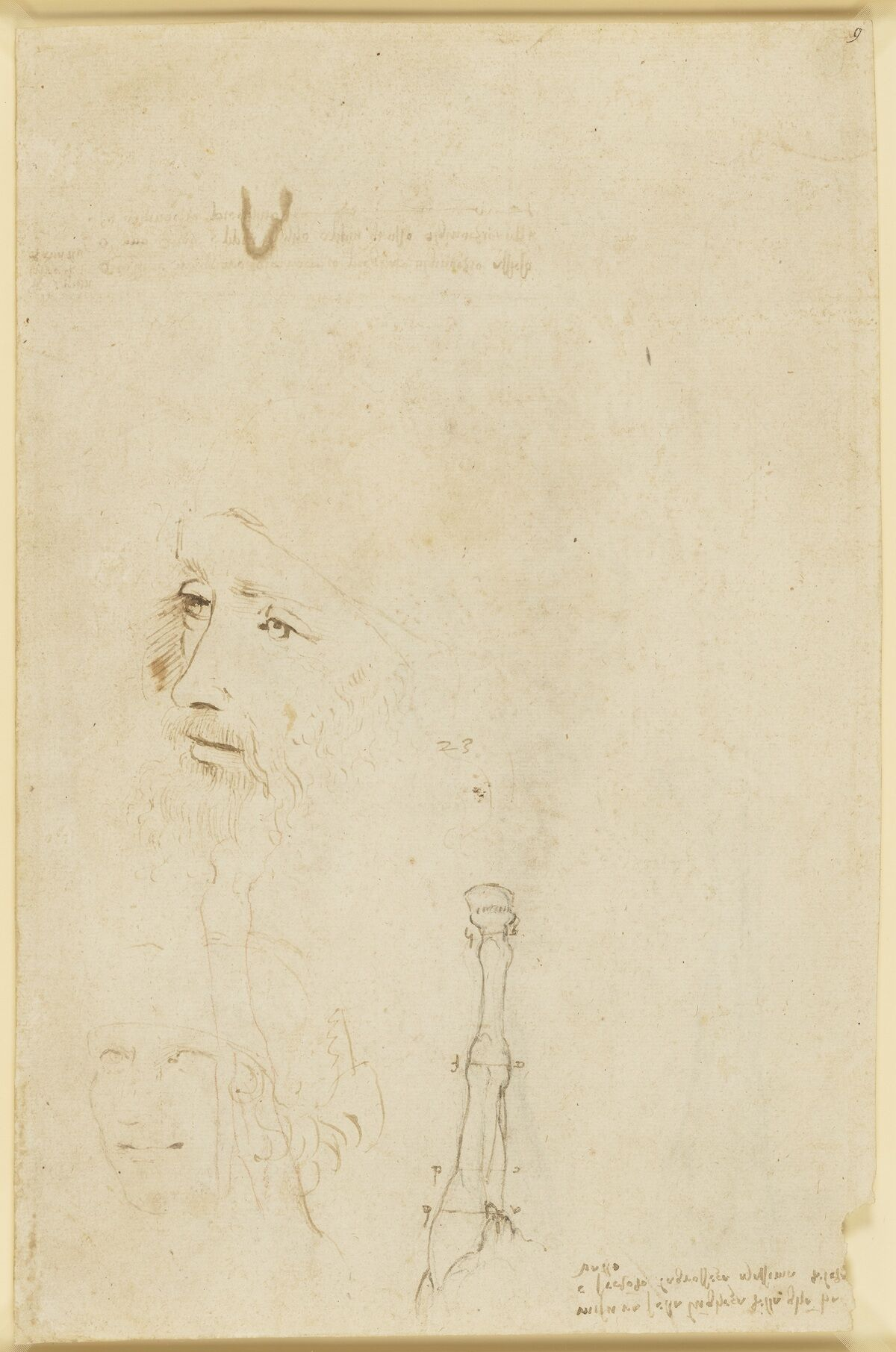 A sketch of Leonardo, the head of a youth, and a horse's legs, ca. 1517–18. Royal Collection Trust / © Her Majesty Queen Elizabeth II 2019.