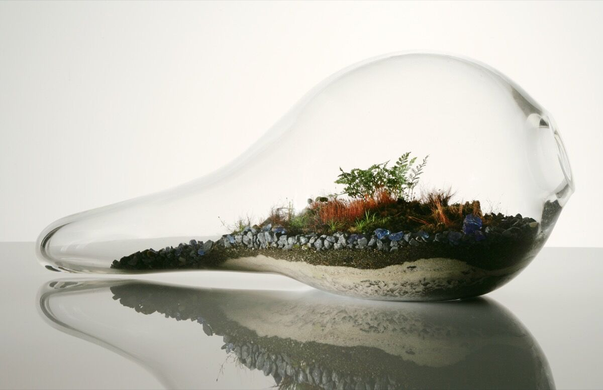 Paula Hayes, Teardrop Terrarium T027, 2006. Photo by Sherry Griffin. Courtesy of the artist.