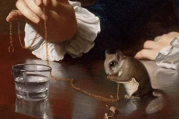 Detail of John Singleton Copley, A Boy with a Flying Squirrel (Henry Pelham), 1765. Courtesy of the Museum of Fine Arts Boston.