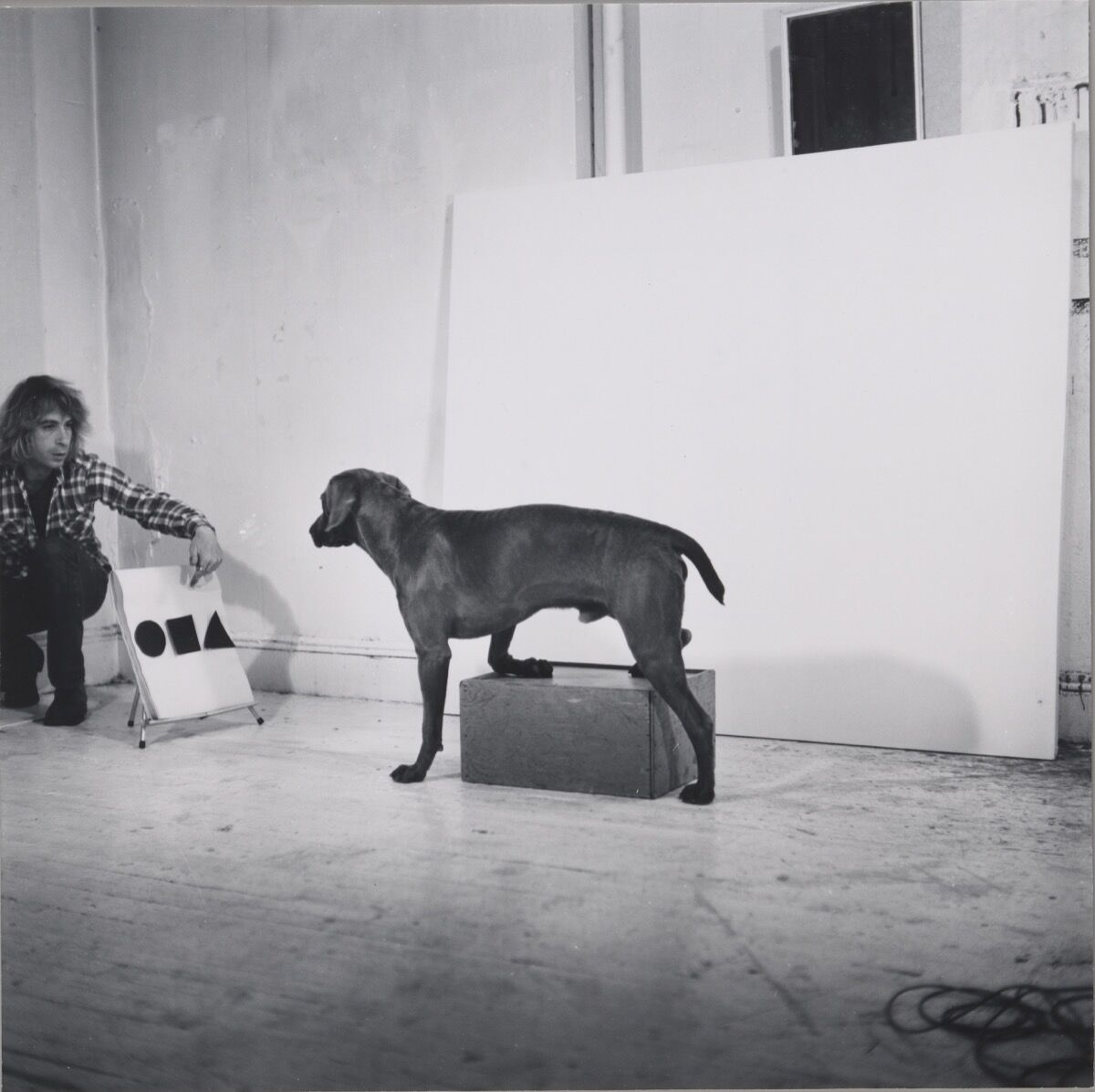 William Wegman, Before/On/After (detail), 1972. © William Wegman. Courtesy of the artist and The Metropolitan Museum of Art.