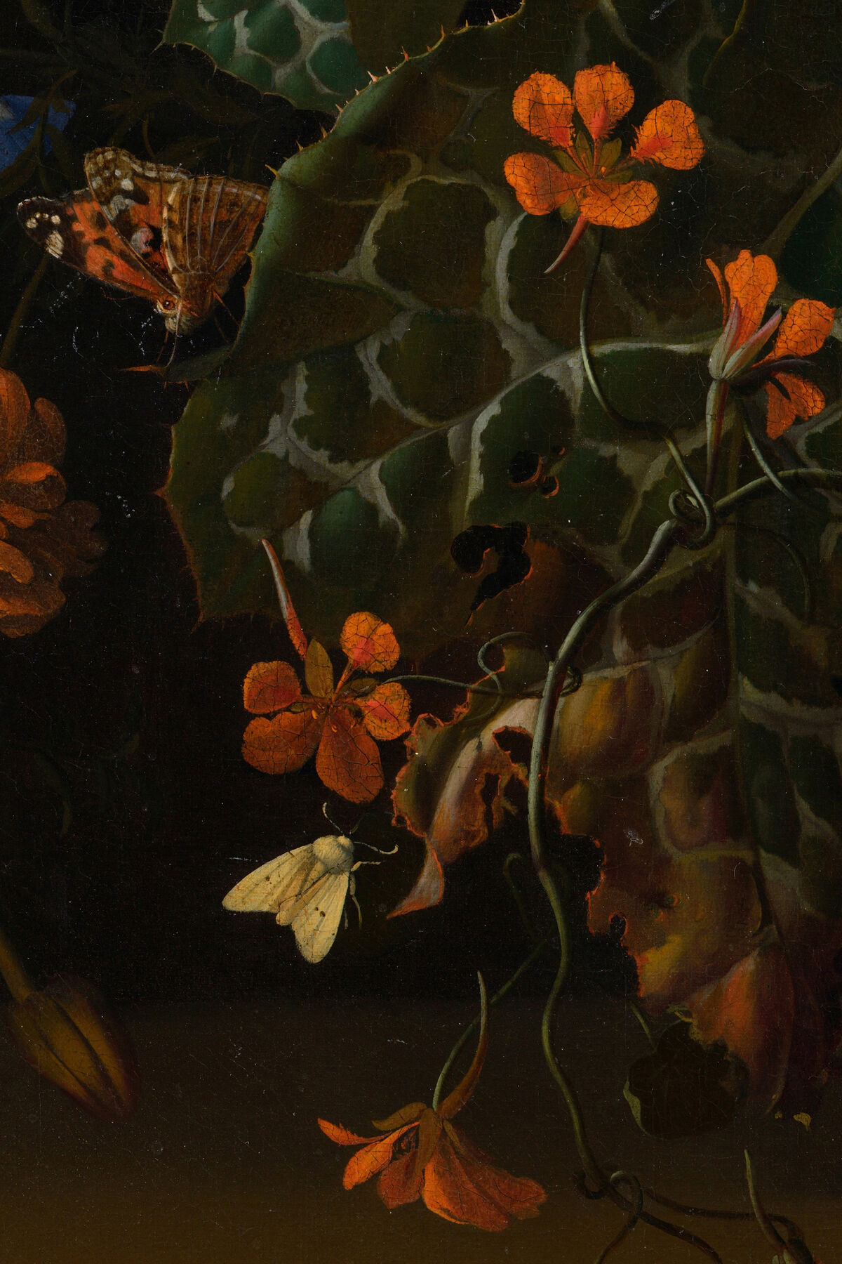 Rachel Ruysch, detail of Roses, Convolvulus, Poppies, and Other Flowers in an Urn on a Stone Ledge, 1680s. Image via Wikimedia Commons.
