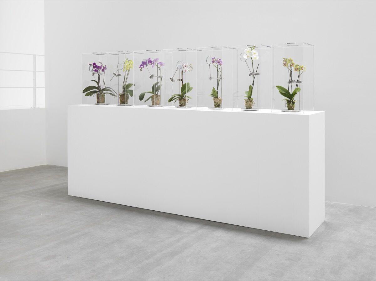 Makoto Azuma Installation with real flowers, 2019. Photo by Genevieve Hanson. Courtesy of Jeffrey Deitch.