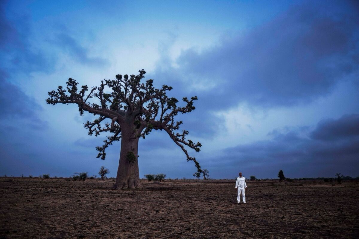 Ayrson Heráclito, Baobá (Baobab), 2015. Courtesy of the artist and Paulo Darzé Gallery.
