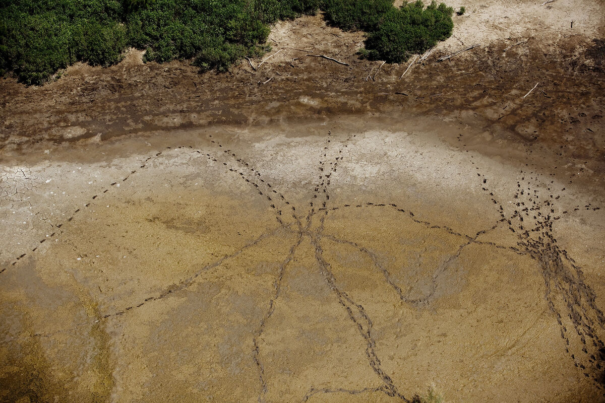 "Fresh migrant footprints through a dried up pond in Mexico just south of Mission, Texas, near the Rio Grande River. Photo by Kfrom the series ""As Above So Below,"" 2014–2015. Courtesy of the artist."
