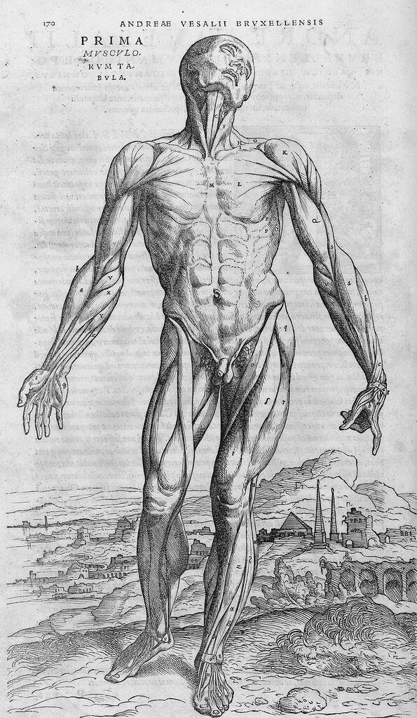 Andreas Vesalius, De humani corporis fabrica, 1543. Photo via Wikimedia Commons.