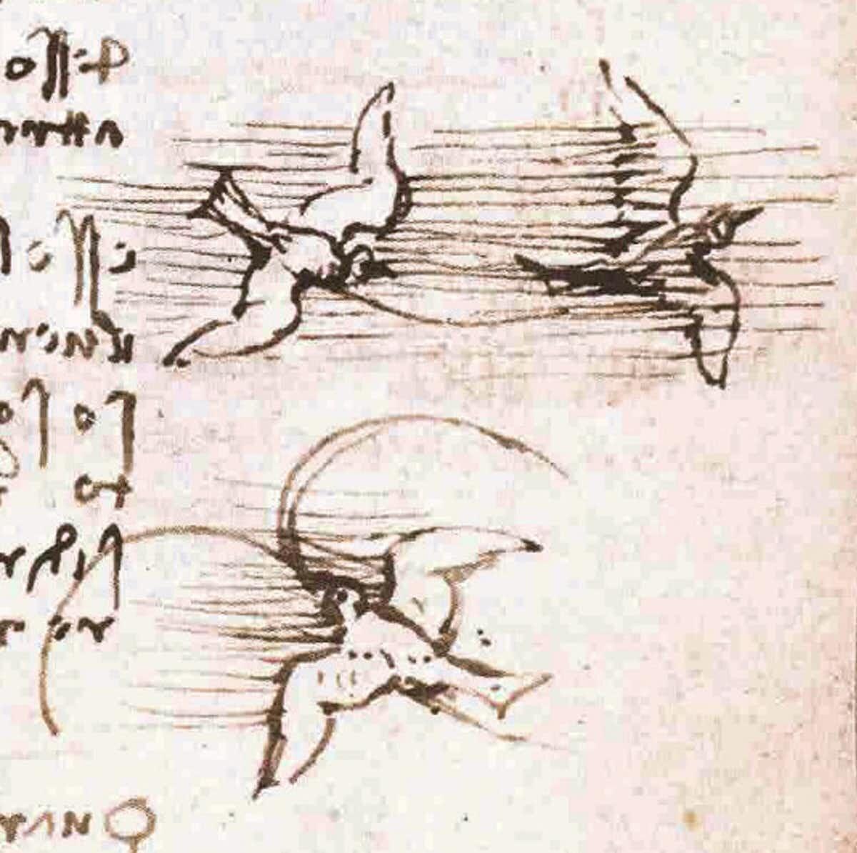 Birds sketched by Leonardo da Vinci. Image via Wikimedia Commons.
