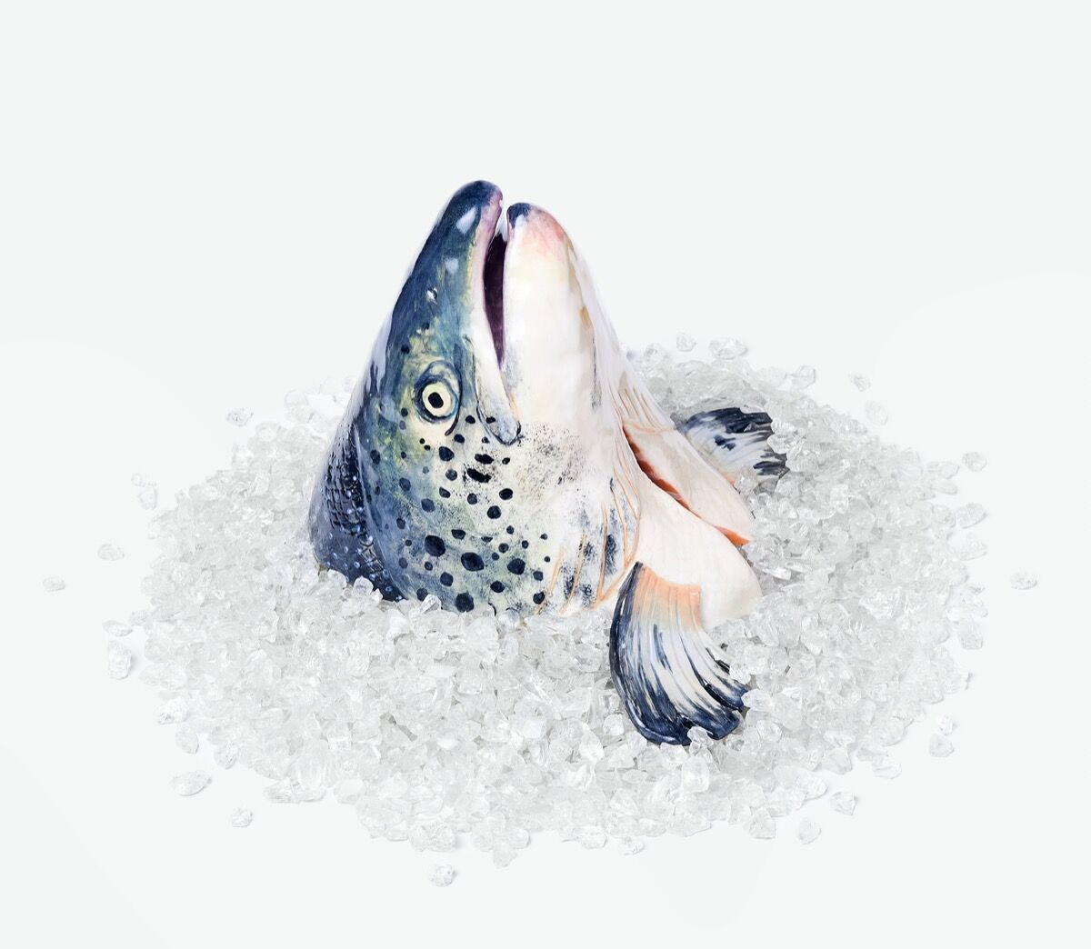 Stephanie H. Shih, Salmon Head on Ice, 2021. Photo by Robert Bredvad. Courtesy of the artist and Dinner Gallery.