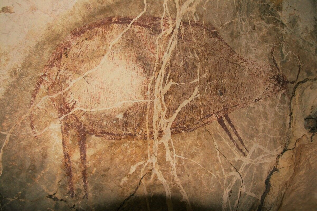 A cave painting of a banteng, believed to be at least 40,000 years old, in a cave in East Kalimantan. Photo © Pindi Setiawan.