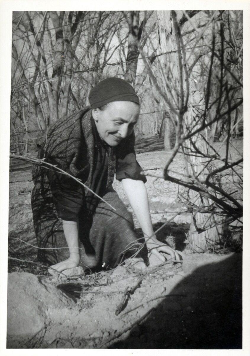 Maria Chabot, Georgia O'Keeffe in the Abiquiú Garden, 1944. © Georgia O'Keeffe Museum.