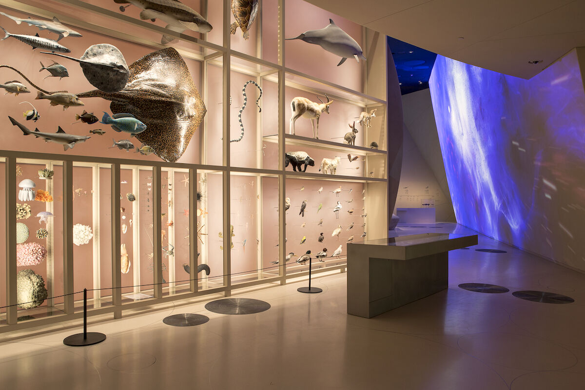 National Museum of Qatar, designed by Ateliers Jean Nouvel, Biodiversity exhibits in Qatar's Natural Environments gallery. Photo credit by Danica Kus.
