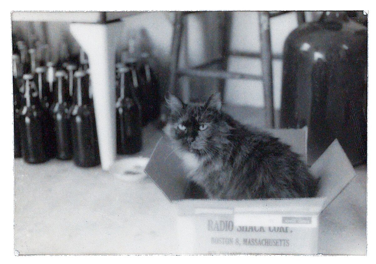Jay DeFeo's cat Pooh Bear. Image from Artful Cats  by Mary Savig, published by the Smithsonian's Archives of American Art, 2019. Courtesy of the publishers.