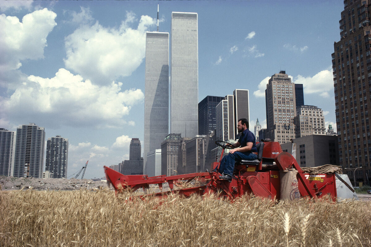 Agnes Denes, Wheatfield – A Confrontation, Downtown Manhattan – The Harvest, 1982. © Agnes Denes. Courtesy of the artist and Leslie Tonkonow Artworks + Projects, New York.