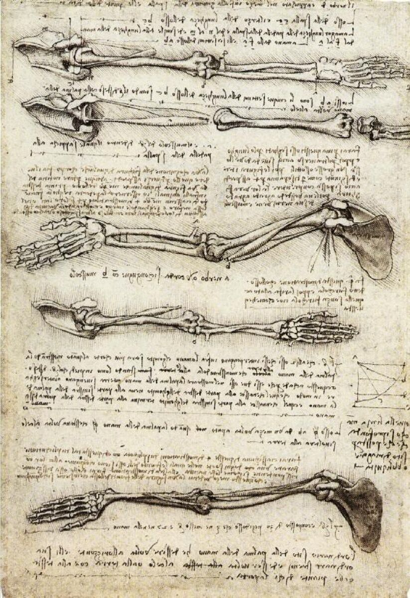 Leonardo da Vinci, Studies of the Arm Showing the Movements Made by Biceps, c. 1510. Image via Wikimedia Commons.