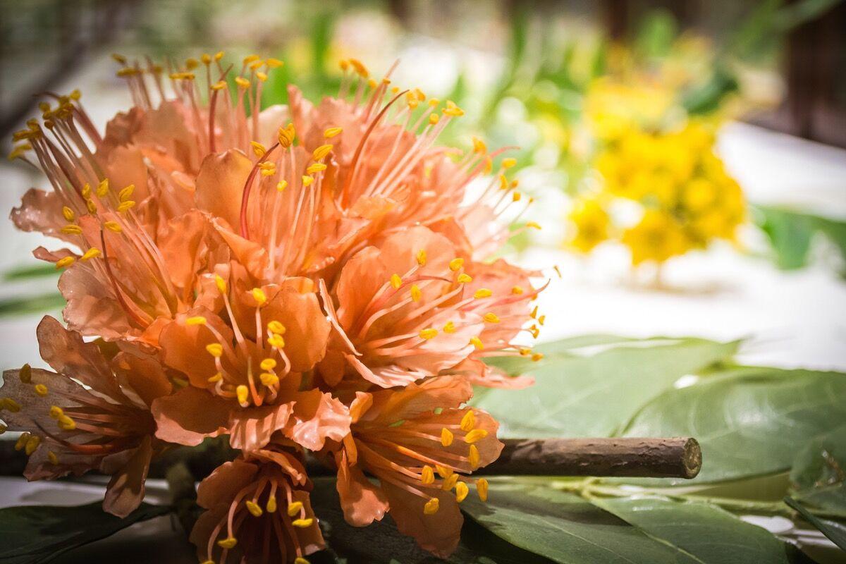 courtesy harvard university herbaria president fellows harvard - Glass Flowers