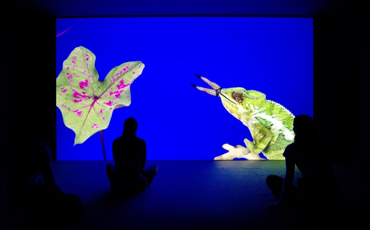 Installation view of Jeremy Deller and Cecilia Bengolea's Bom Bom's Dream, 2016. Image courtesy of the artists and Hayward Gallery.