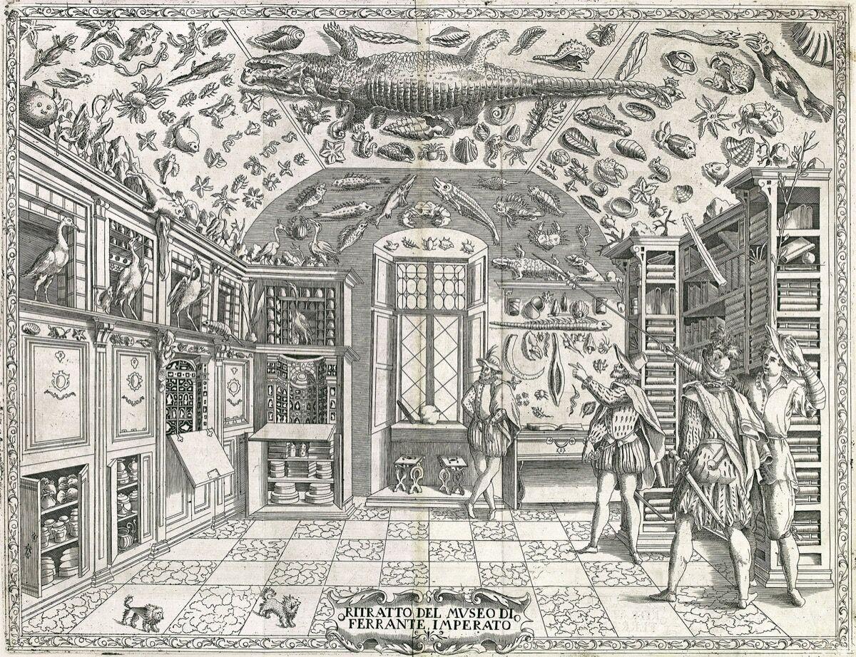 Engraving frm Ferrante Imperato, Dell'Historia Naturale, 1599. Image via Wikimedia Commons.