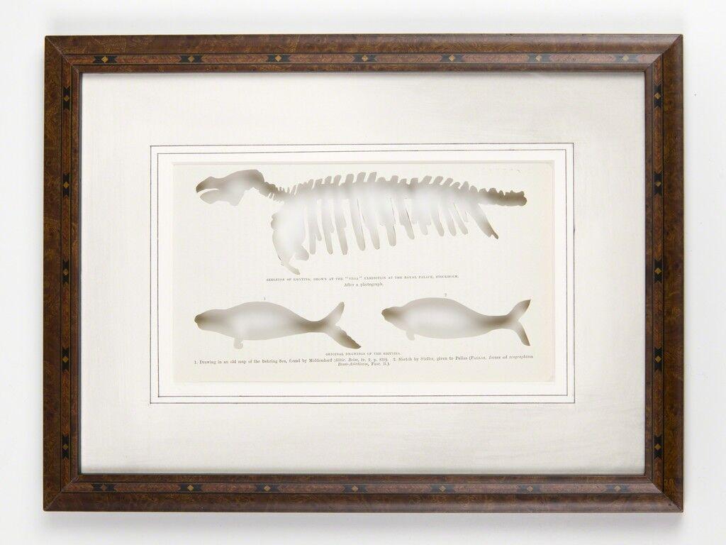 RIP Steller's Sea Cow: After Wilhelm Meyer, 1881
