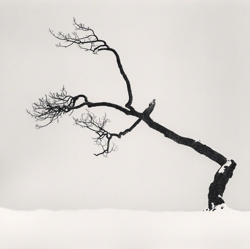 Kussharo Lake Tree, Study 6, Kotan, Hokkaido, Japan