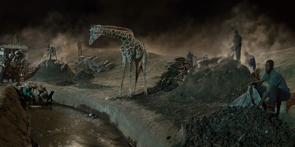 Charcoal Burning with Giraffe & Worker
