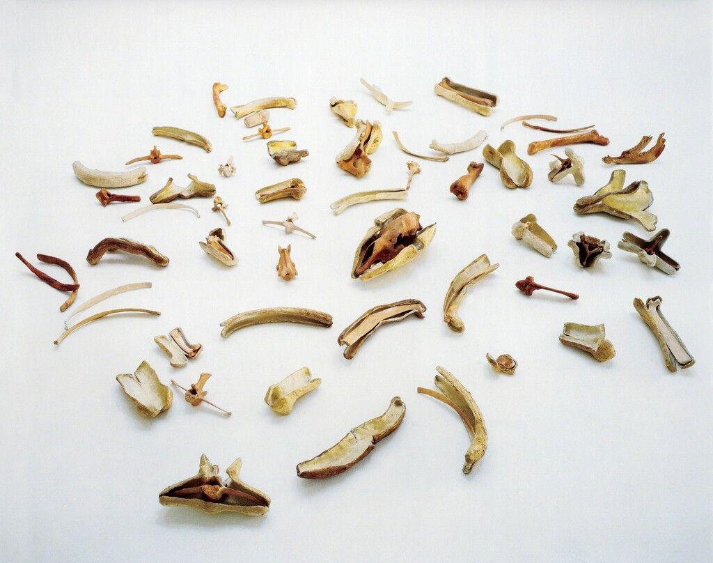 Bones and Their Containers