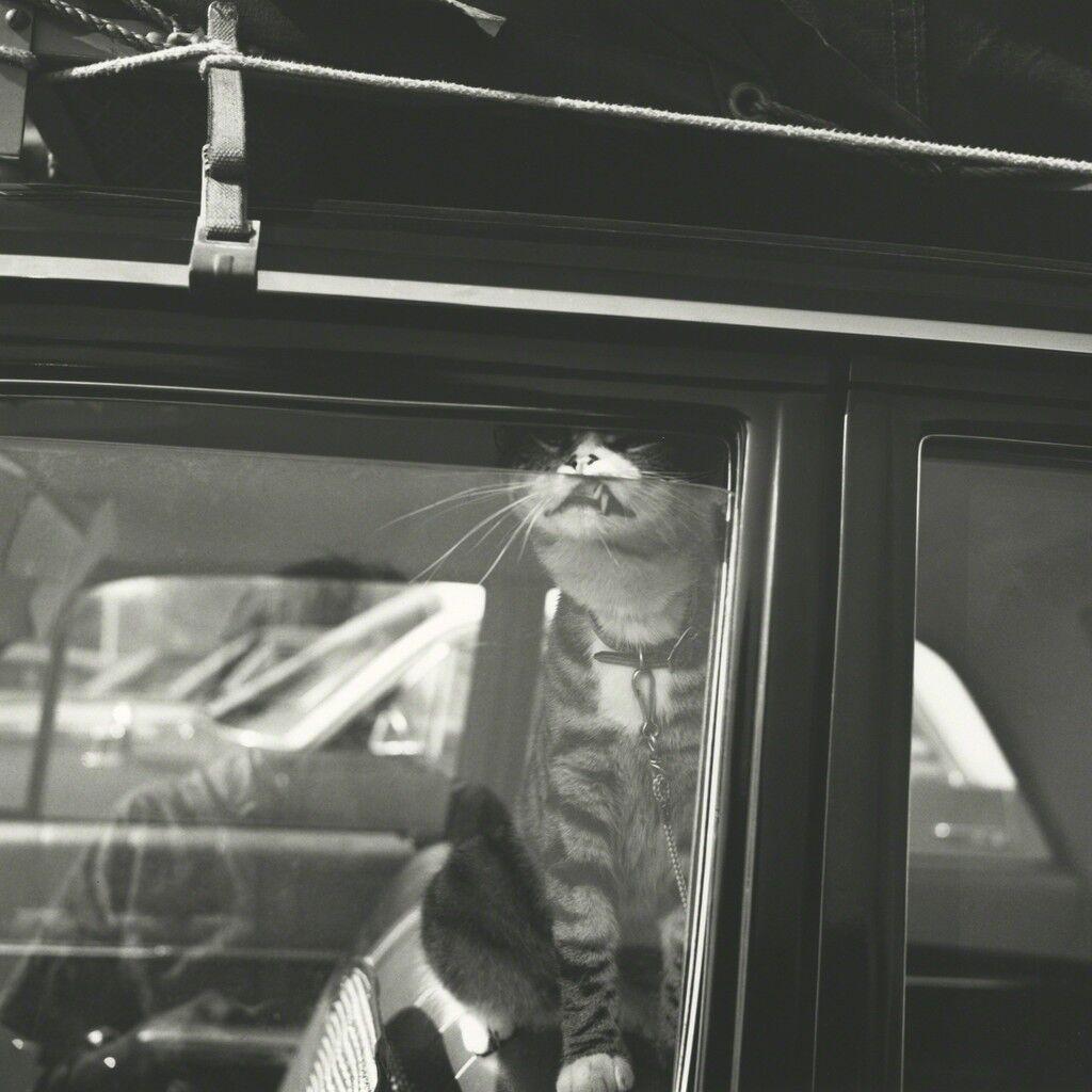 Self Portrait, Chicago Area, August 1966