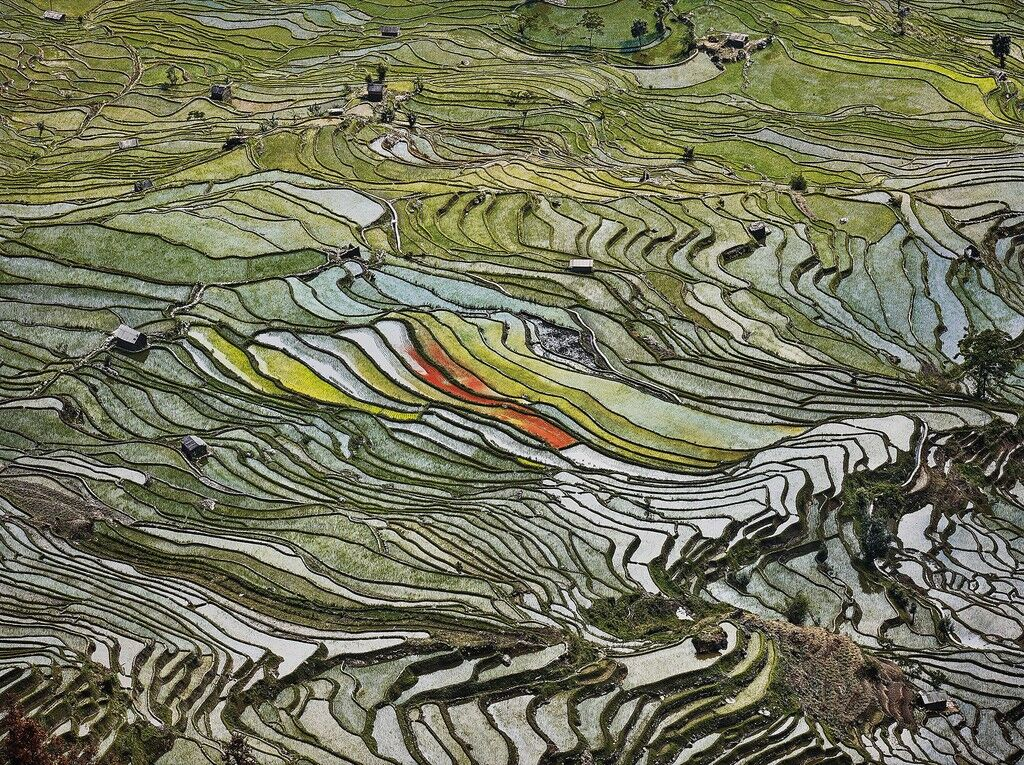 Rice Terraces #2, Western Yunnan Province, China