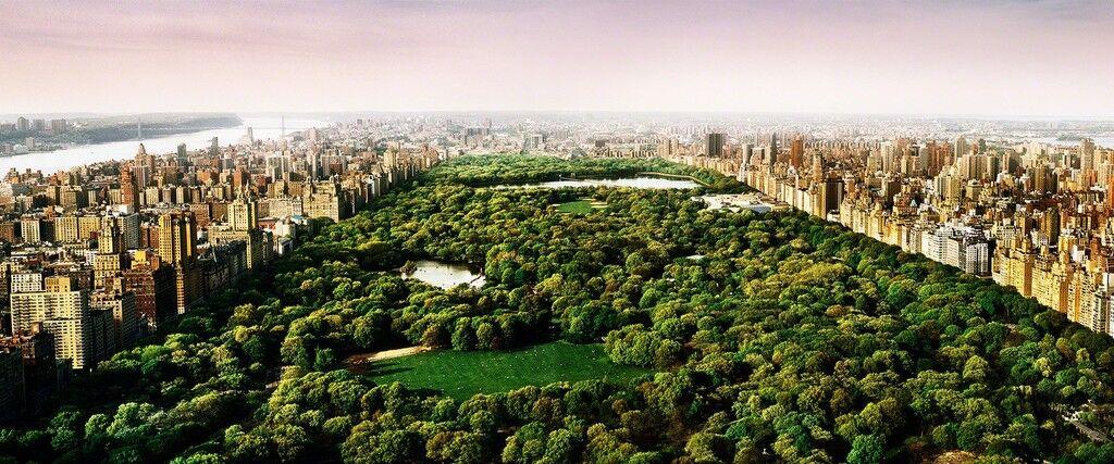 Dreams of Central Park