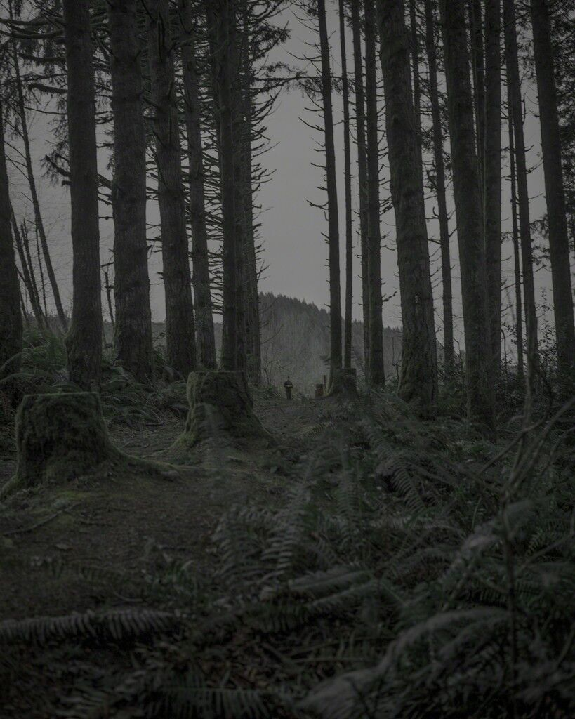 From the series Darkwood, #19