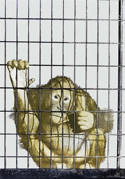 Scimmia in gabbia (color variation)