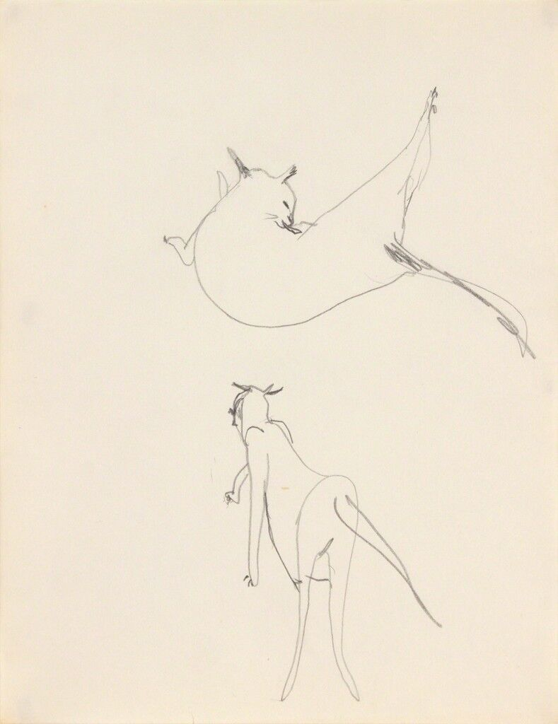 Untitled (cat grooming and walking)