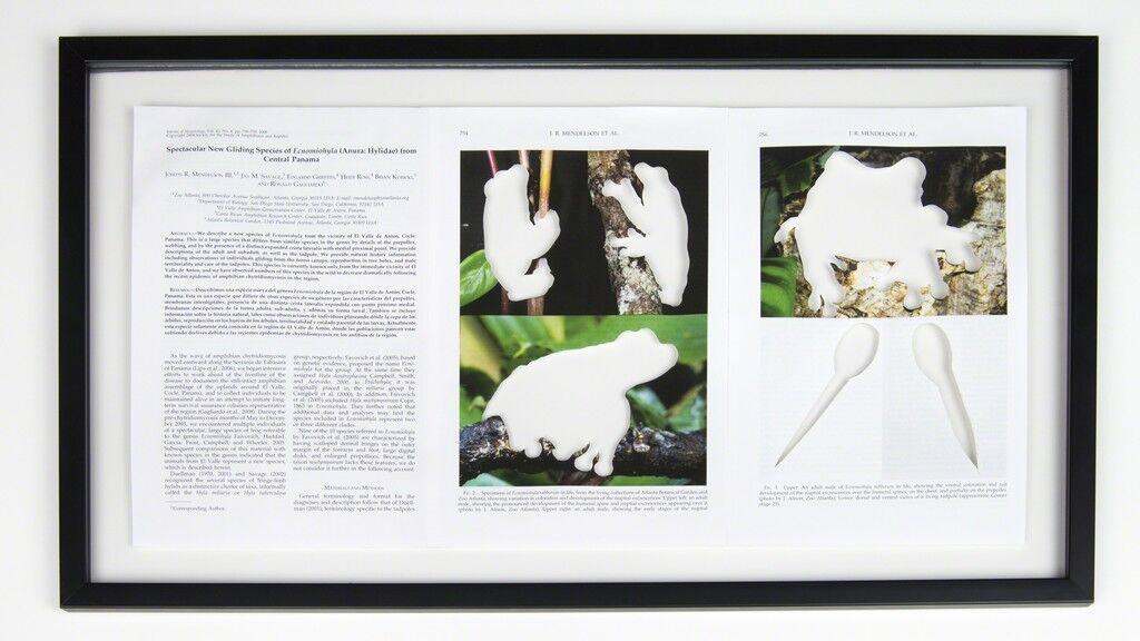 RIP Rabb's Fringe-Limbed Treefrog: After J. Alison and B. Wison