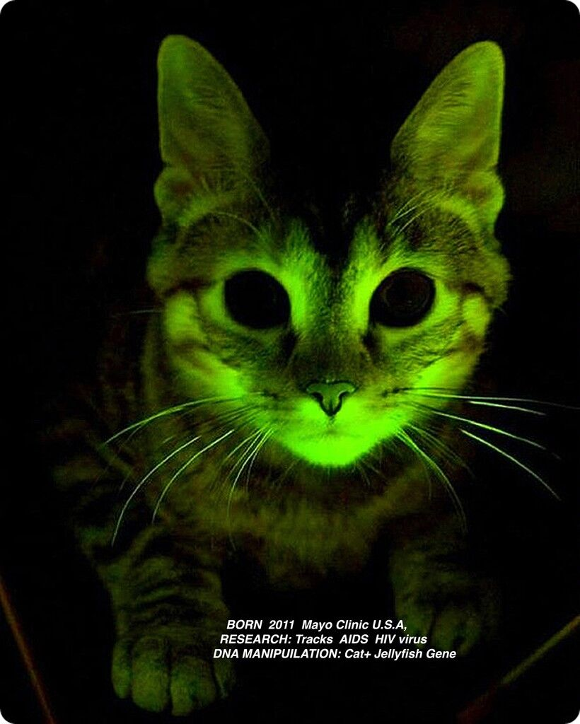 Glowing  Cat from The  Infinity Engine (detail)