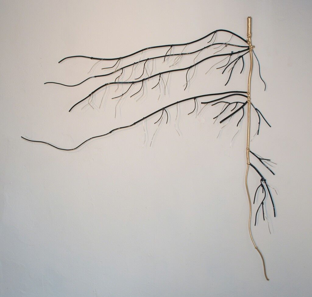 Taproot Surviving