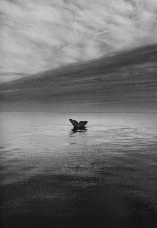 Whale Tail, Valdes Peninsula, Argentina