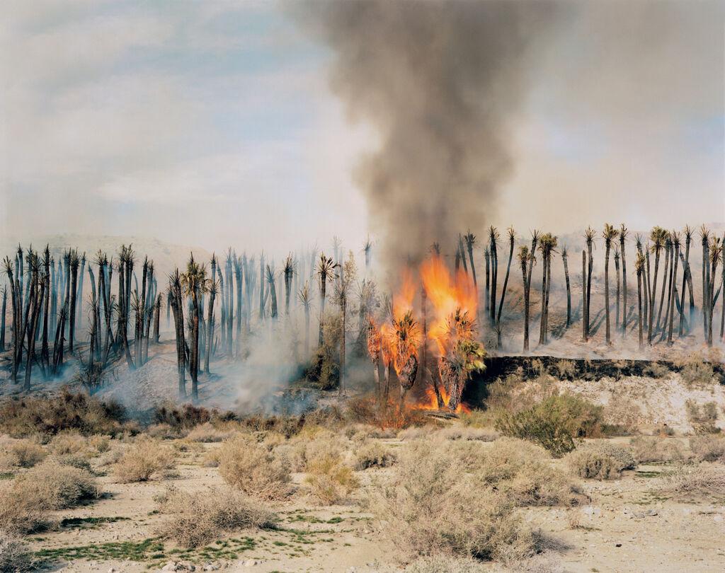 Desert Fire #1 (Burning Palms)